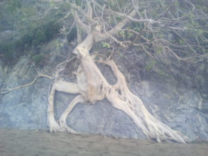 tree-rock