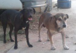 dogs-Shelley-Dixon