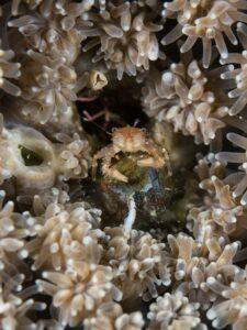 soft crab