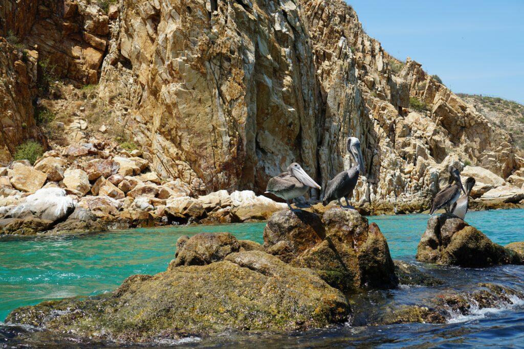 Los-Cabos-bay